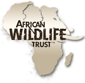 African Wildlife Trust art show at Columbine Gallery this August.